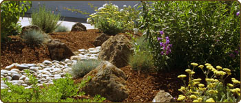 Low water, All Organic, Ecologically Responsible Garden Design