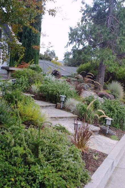Low Maintenance Landscape Design And Garden Design Bay Area | Taproot Garden Design U0026 Fine Gardening