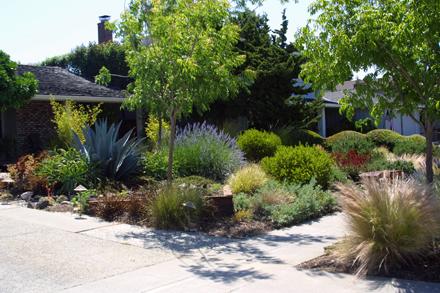 Taproot Garden Design Fine Gardening Low Water Urban Gem