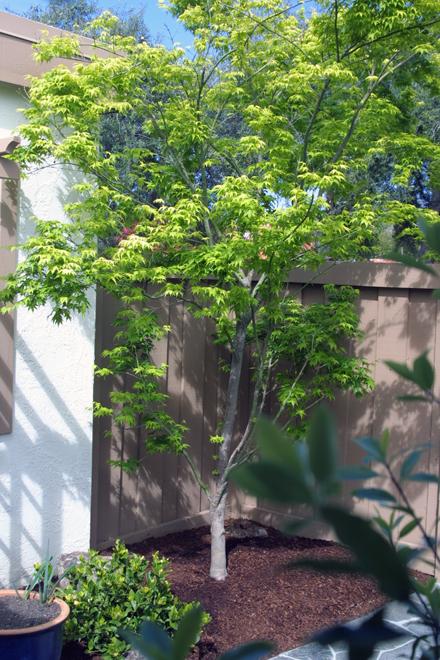 Low Water Garden Design Garden Ideas And Garden Design